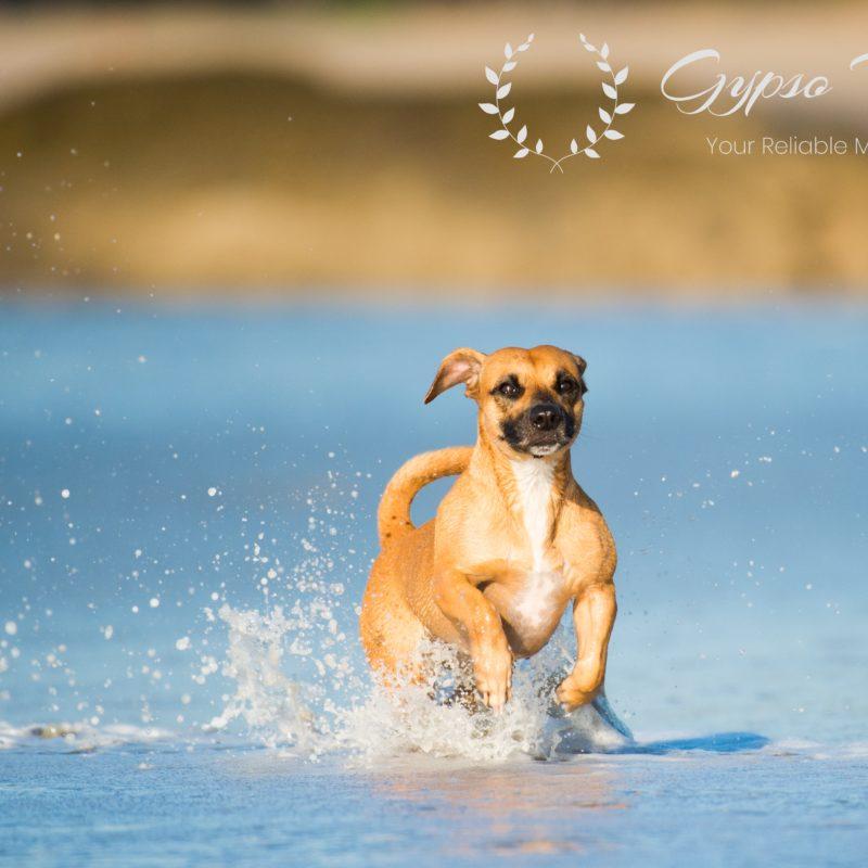 Freelance Photographer Singapore | Pet Photography Singapore