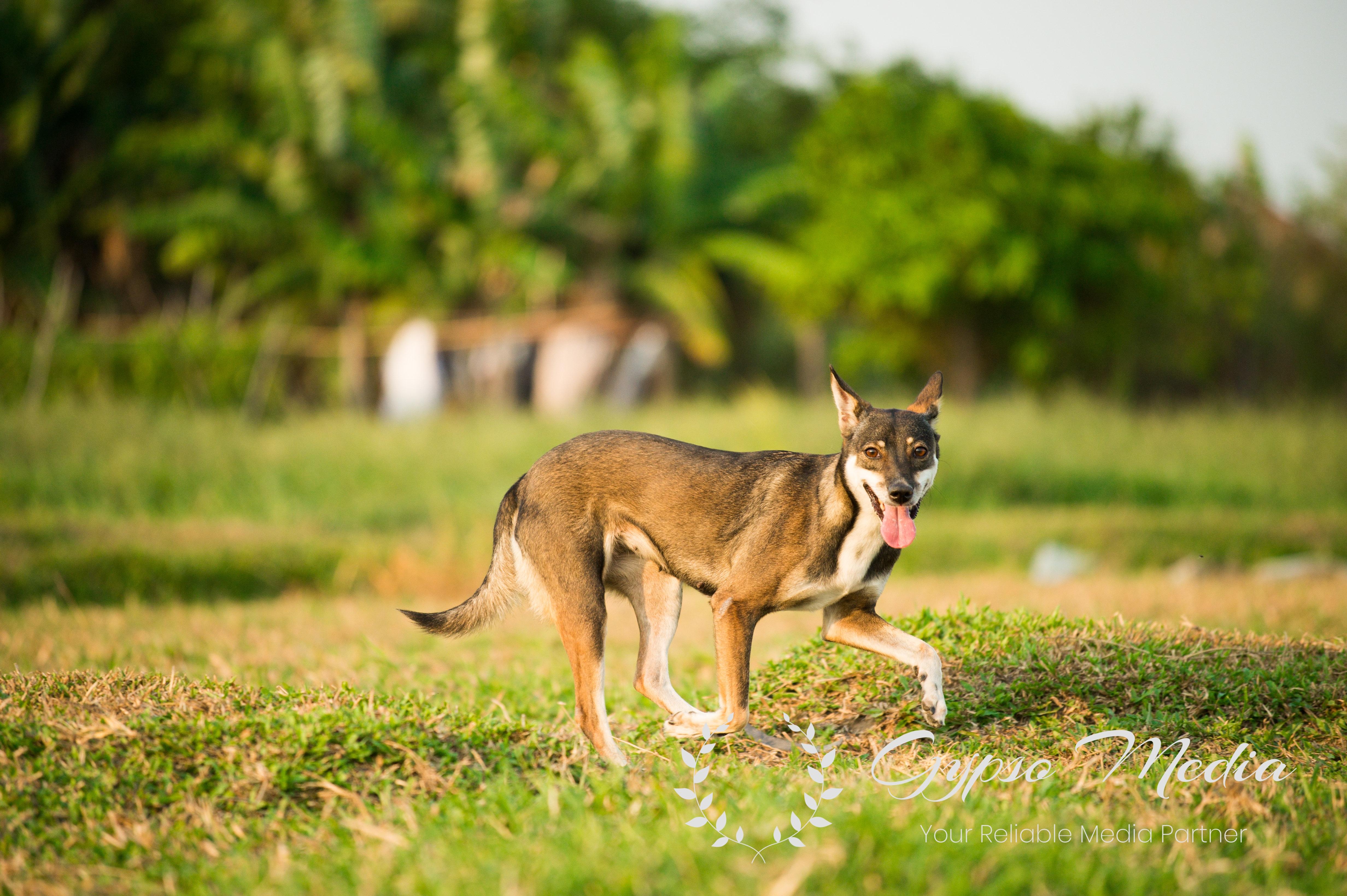 Pet Photography Singapore | Pet Photoshoot Singapore